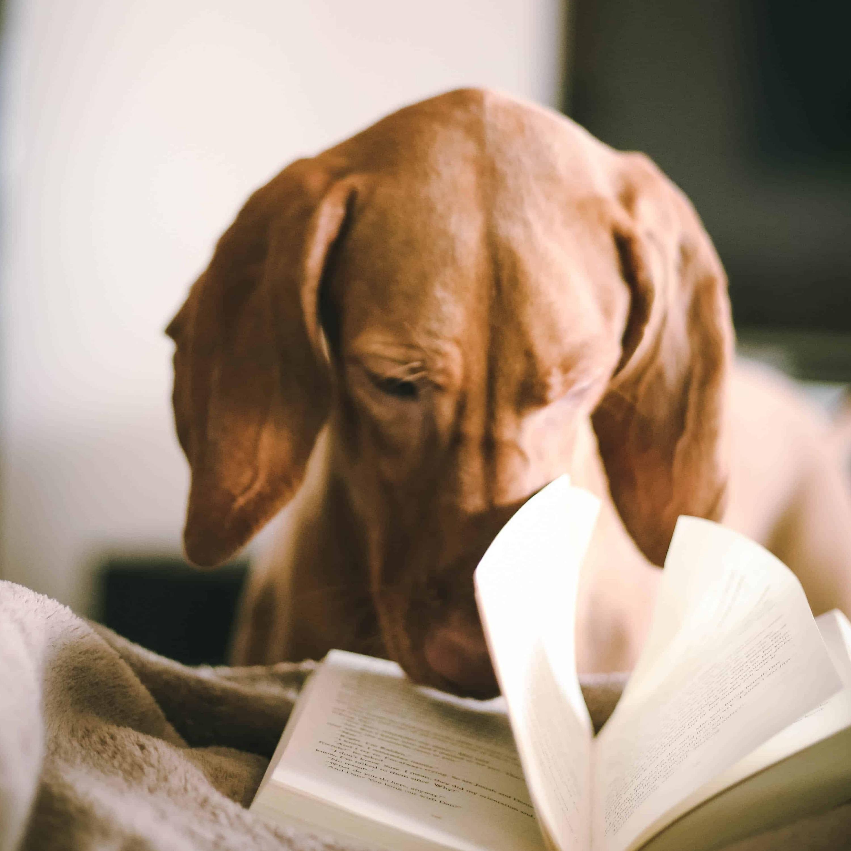 351 - E mais uma vez, Alexia está lendo em inglês... Na frente de vocês! 🙆♀️