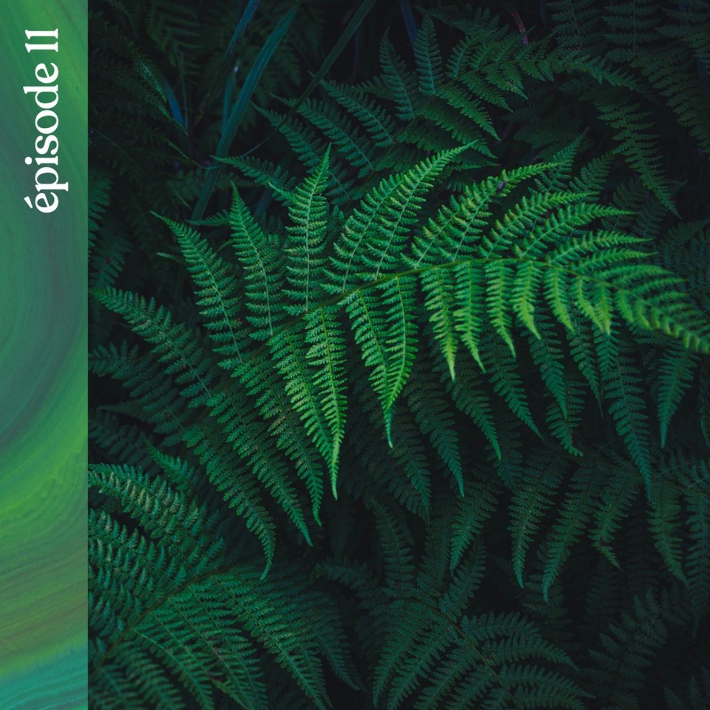 #11 — À la recherche des plantes sauvages de Nouvelle-Zélande, avec Vincent Piton
