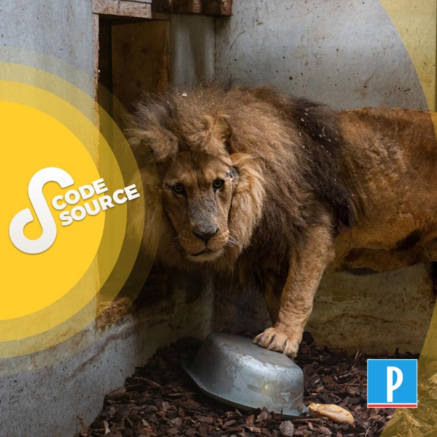 Derrière le sauvetage du lion Jon, l'engagement d'une femme qui a voué sa vie aux animaux