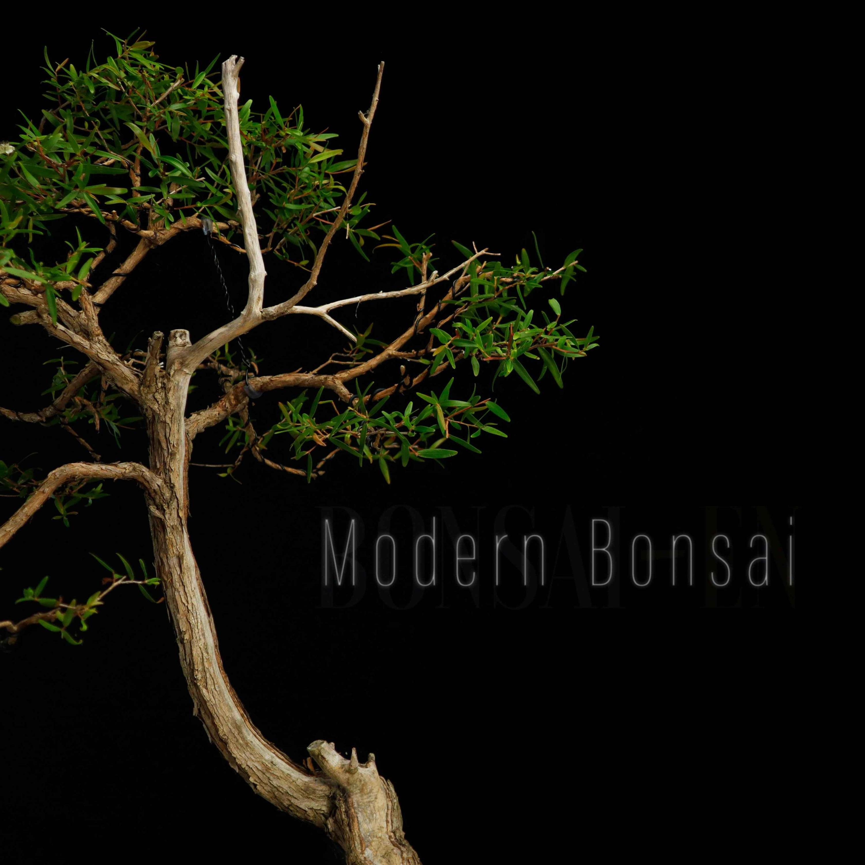 "Modern Bonsai Episode 14 "" The Bonsai Zone "" Ft Nigel Saunders"
