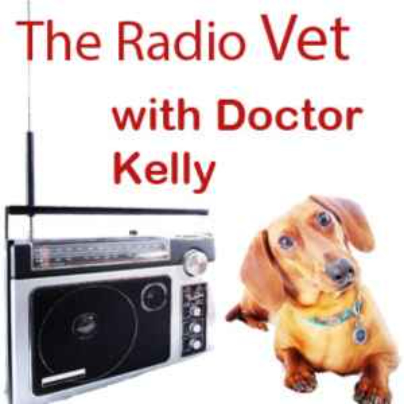 """The Radio Vet with Doctor Kelly – """"Food Allergies"""""""