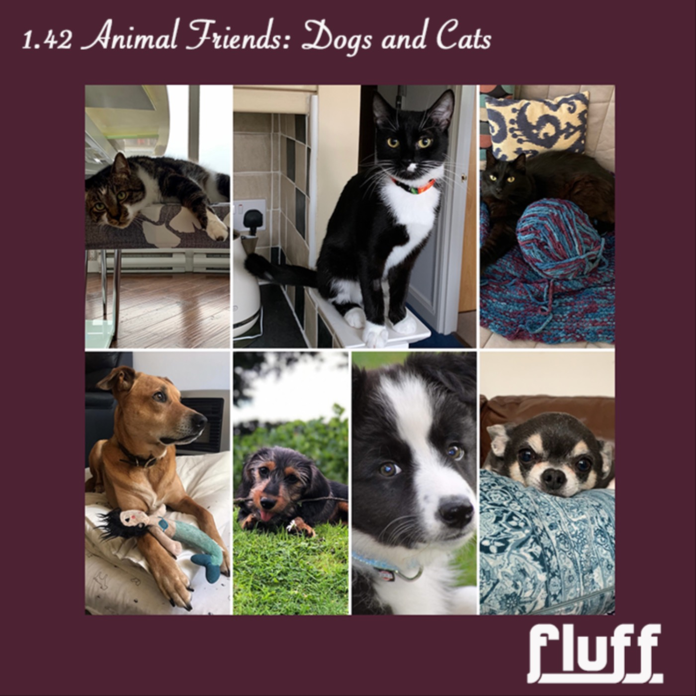 Animal Friends: Dogs and Cats