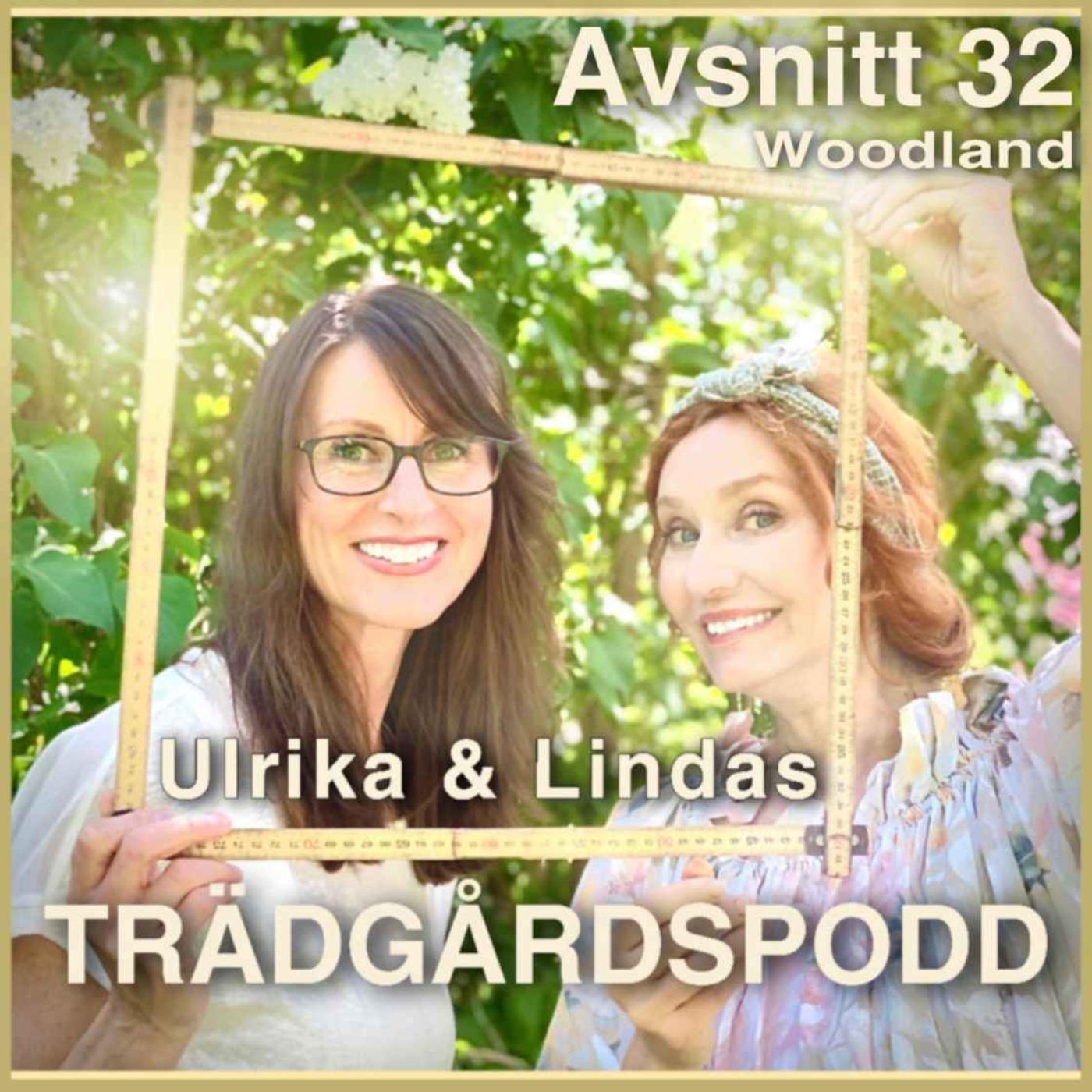 Avsnitt 32 - Woodland