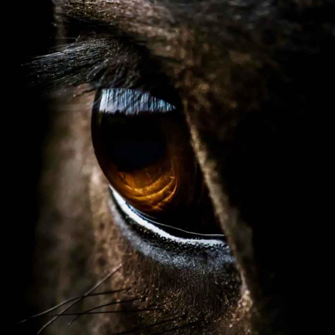 59 - Har hesten deg i øyet?