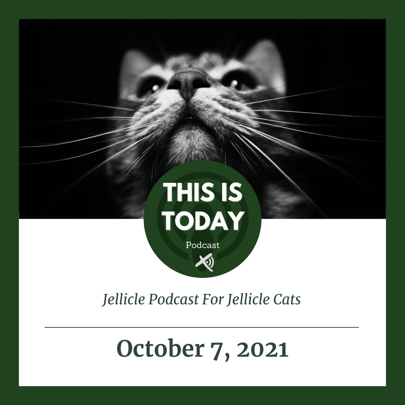 Jellicle Podcast For Jellicle Cats