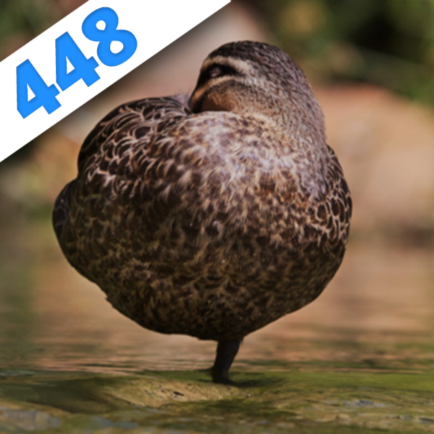 448 - Réveil en coup de fouet