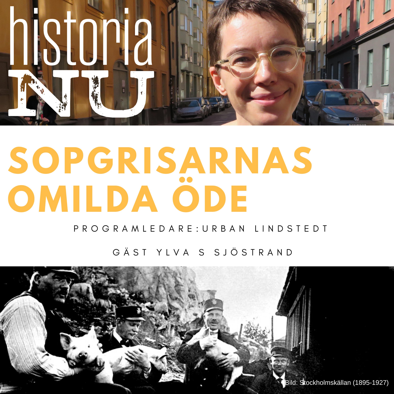 Stockholms sopgrisars oblida öde i stadens tjänst (nymixad repris)